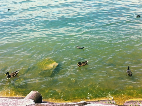 Lake of Viverone